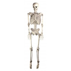 Skeleton Life Size Halloween Prop Decoration