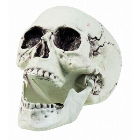 Skull Maxilla With Moveable Jaw