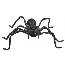 Scary Halloween Spider