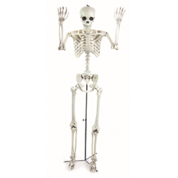Realistic Life Size Standing Skeleton - PRE ORDER