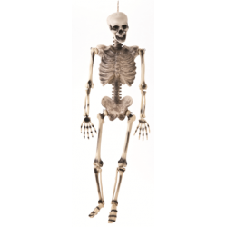 Blow Mould Jointed Skeleton