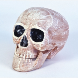 Skull Head Halloween Table Decoration